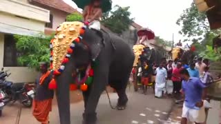 Elephant kicks man with legs!!! - Video