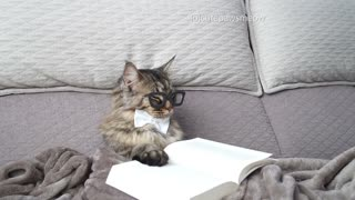 Adorable Kitty Falls Asleep Mid-Reading - Video