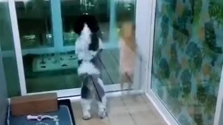 Dogs Excited to See Owner Coming Home