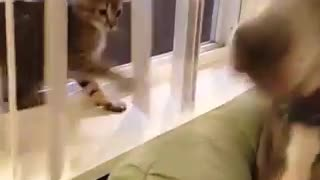 Cat Dog  Play - Video