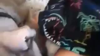 Pitbull Puppy Meets Baby For First Time!