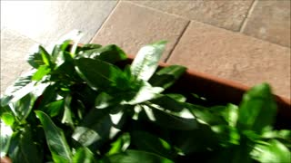 Balcony flowers for FREE - Video