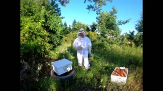 Update on Beehive relocated from earthmover
