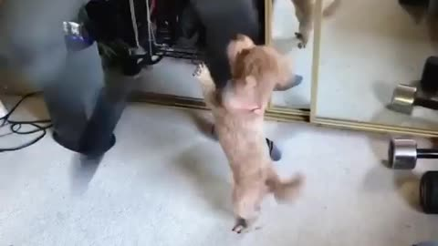 LoL Look How Funny This Puppie Dancing With His Owner