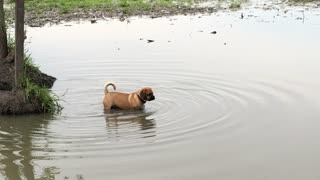 Buster ignores no swimming sign