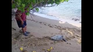 Helping a Stuck Sea Turtle - Video