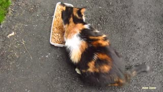 Hungry cat meow very loud on the street  ! - Video
