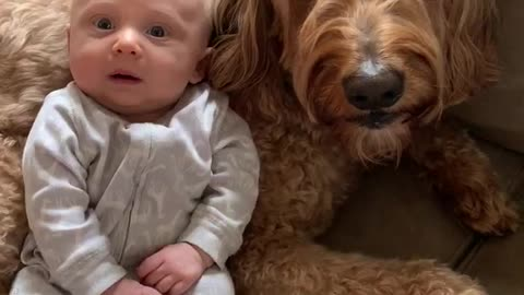 Talking dog tells baby boy that he loves him very much
