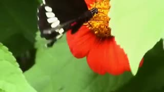 Flower and baterfly together - Video