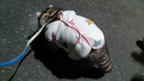 Raccoon goes home in his pajamas, twitching his butt.
