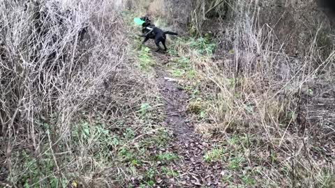 Dog Does Epic Jumps To Rescue Frisbee
