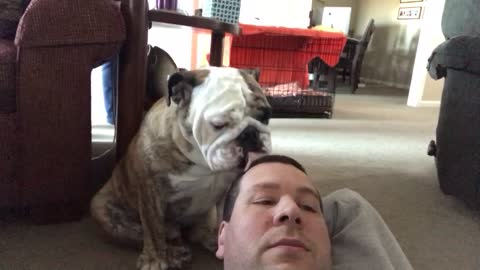 Dog owner tries to watch football with English Bulldog