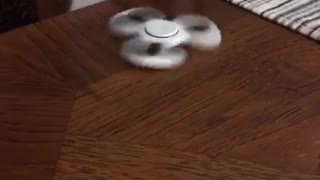 Orange white cat plays with white fidget spinner  - Video