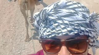 Dahab Camel Riding Adventure