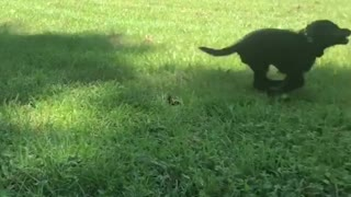Dogy Playing with His Owner