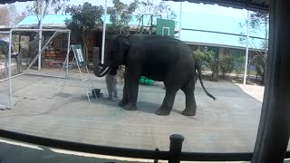 Elephant Show in Thailand - Video