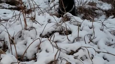 Bind doggy extremely excited for first snowfall