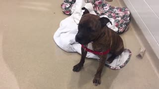 Shelter Longest-Term Resident Cries All Day Hoping His Forever Family Will Hear Him - Video