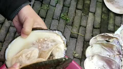 Opening a Pearl Filled Oyster