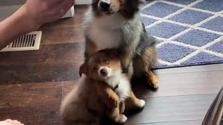 Dog shows how much he loves his brother