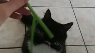 Cat reacts to green onion