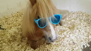 Horse Wearing Sunglasses - Video