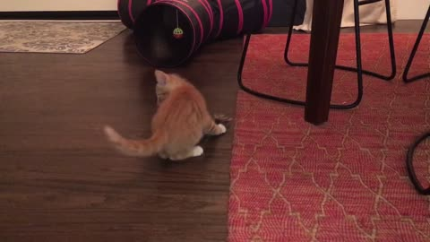 Tag team wrestling. Kittens vs feather!