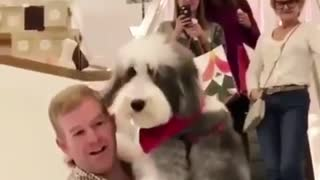 Man in plaid shirt goes down escalator carrying white grey sheepdog in arms