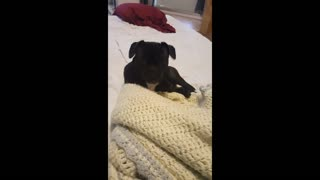 Small Puppy Enjoy A Water Cookie  - Video
