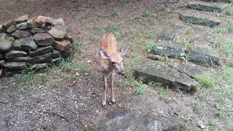 Adorable Fawn Chillin' With the Herd