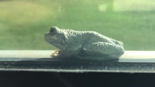 Frog on a window