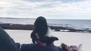 Rescue Border Collie Practices Her CPR