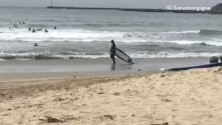 A man dragging a surf board on the beach - Video