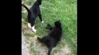 try not to laugh or grin while watching funny animals
