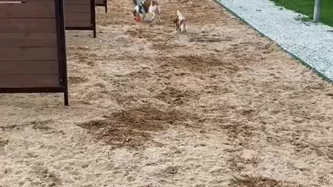 Peaches playing catch-up