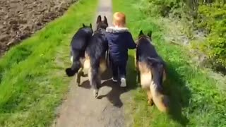 3-year-old dog whisperer will blow your mind! - Video