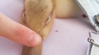 This is the cutest little ducky you will ever see