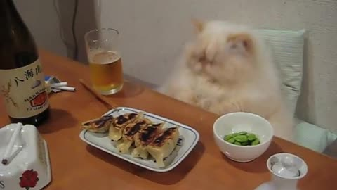 Spoiled cat enjoys full dinner spread