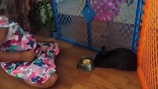 Pet bunny refuses to eat dirty apples - Video