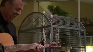 Singing Parrot Turns Cage into Stage