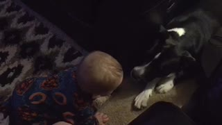 Baby notices family dog, gets super excited