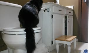 Why you should keep your cat out of the bathroom - Video