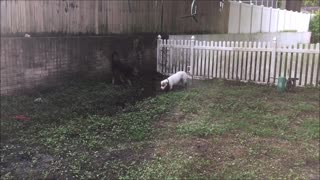 Zeke and Abby in the mud - Video