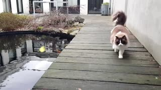 Cat Loves Fish - Video