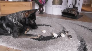 German Shepherd welcomes newly hatches chicks