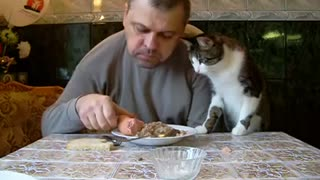 Cat Sees Sausage On Owner's Plate And Wants To Steal It From Dad - Video