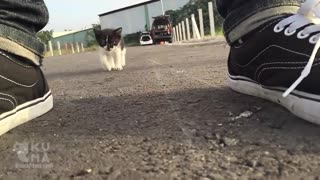 Cute Stray Kitten Follows Human Around Everywhere! - Video