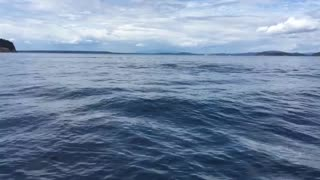Killer Whale Nearly Jumps Into Boat Off BC Coast - Video