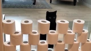 Bewildered cats take part in the toilet paper challenge