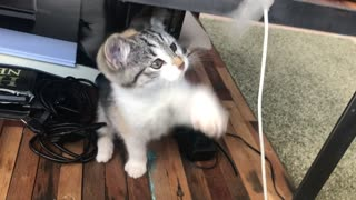 when the cat play with tape